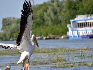 Delta Dunării rămâne una dintre cele mai apreciate destinații turistice din România în anul 2020, FOTO AMDTDD